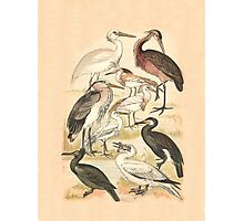 Water Birds Photographic Print