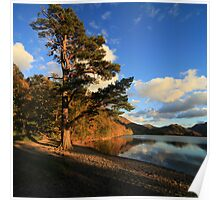 The Scots Pine Poster