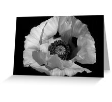 White Poppy Greeting Card