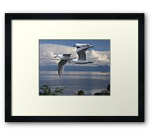 Gulls in Flight Framed Print