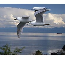 Gulls in Flight Photographic Print