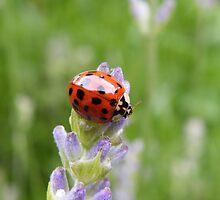 Lavender Lady by Yool