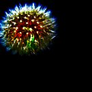 Dandelion Firework by Lyndy