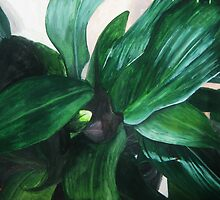 Aspidistra (From Above) by Holly Daniels