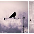 Crow by Silvia Ganora