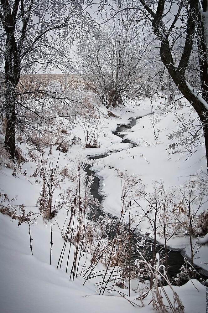 Winter Stream by Mark David Barrington