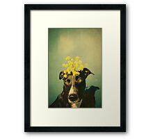 sunseeker Framed Print