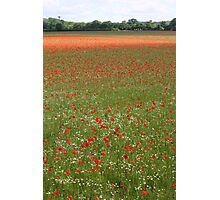 Flanders Fields Photographic Print