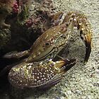 Colourful Crab by James Hall