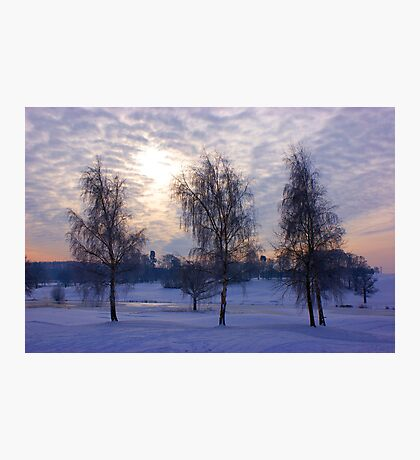 Three tree snow scene Photographic Print