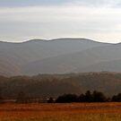 Mountain View by Terri~Lynn Bealle