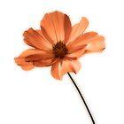 Flower-003 by DigitalTulip