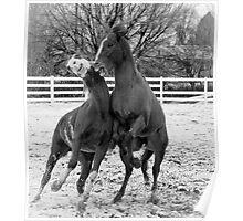 Rumbling Stallions II Poster
