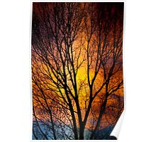 Colorful Tree Silhouettes Poster