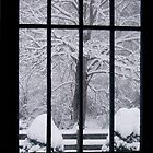 Through Winter&#x27;s Window by Hank Eder