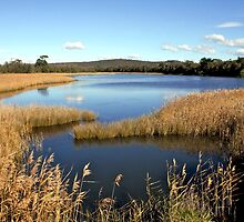 Bega River, NSW South Coast, Australia by Cindy Ritchie