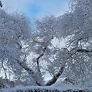 Snow Trees by relayer51