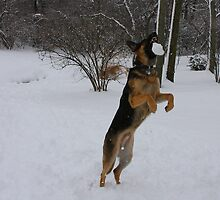 Catching Snowballs - Kaiser by Tony Wilder