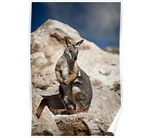 Yellow Footed Rock Wallaby Poster