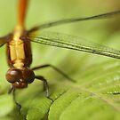 Dragonfly by Raychel