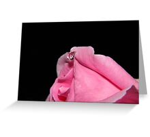 Tear On A Rose Greeting Card