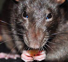 Ratatouille by Rebecca Holman