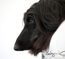 Echo the Afghan Hound. by LinleyandCharles Photography
