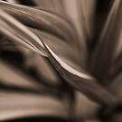 Impression Sepia Fern: On Featured: Sepia-only Group by Kornrawiee