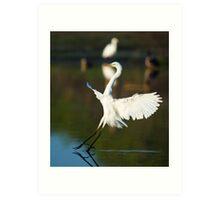 Great Egret, Knuckey Lagoons Art Print