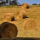 haybales by Jane  mcainsh