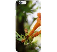 Orange Blossoms iPhone Case/Skin