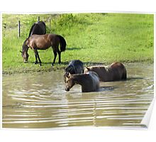 """""""The Horses 5: Camera Shy""""... prints and products Poster"""