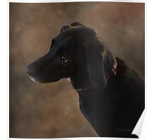 Reilly the Black Lab Poster