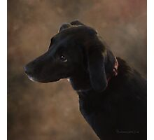 Reilly the Black Lab Photographic Print