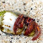 Gili Island Hermit Crab 1 by Normf