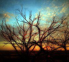 longwood sunrise by ashara