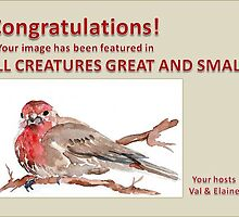 New Feature banner Challenge - 'All Creatures Great & Small' by Maree  Clarkson
