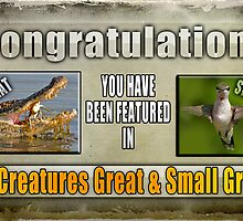 All Creatures Great and Small Featured Banner by imagetj