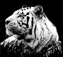 Tiger Tiger by JaymeeLS