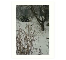 Country Garden in Winter Art Print