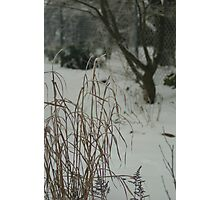 Country Garden in Winter Photographic Print