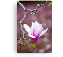 Pink Magnolia Blossom Canvas Print