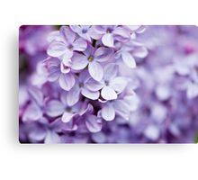 Colorful Lilac Canvas Print