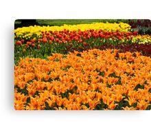 Colorful Tulip Garden Canvas Print