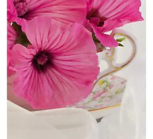 Lavatera Flowers In The Tea Cup Photographic Print