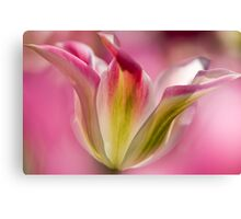 Green and Pink Tulip Canvas Print