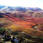 Foz Côa (wineries) by marokoshi