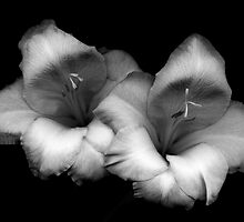 Pair of Gladiolas by Oscar Gutierrez