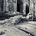 Ta Phrom,  Cambodia by thesiracusas