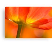 Orange Tulip Canvas Print